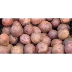 Patata shanon (vermella) kg Llívia